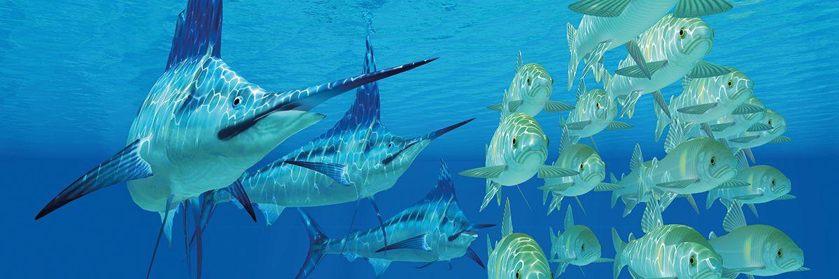 fg-swordfish